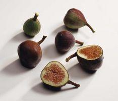 Higuera que produce frutos durante todo el año