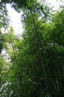 Cómo utilizar postes de bambú como accesorios florales