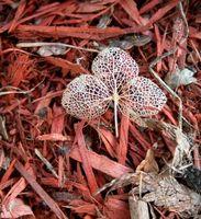 Hace cedro rojo Mantillo Repel termitas?