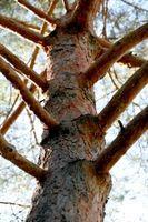 Insecticida para gorgojos de madera