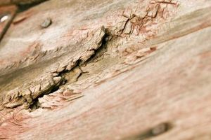 Cómo arreglar madera Rot debajo de la alfombra