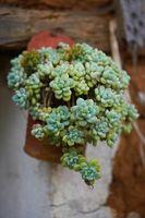 ¿Cómo hacer crecer plantas suculentas: Propagación y enraizamiento