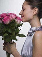 El cuidado de las rosas en un florero con aditivos