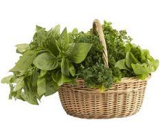 4-pulgadas de tiesto de la hierba de las plantas por favores de la ducha