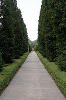 Los mejores arbustos para Proyección en el Sur