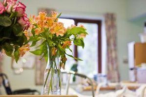 ¿Cuál es la vida útil de las flores de corte?