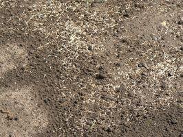 Cómo seleccionar Materiales de Siembra