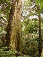 Tipos de plantas en una selva tropical