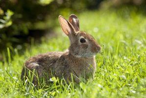 Los conejos y las semillas de girasol
