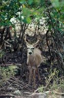 Cómo mantener a los ciervos a cabo con una valla doble