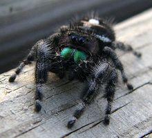 Cuáles son los peligros de insectos y Pest Control Productos químicos?