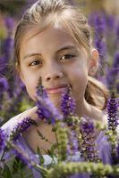Montessori: Partes de una flor