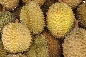 ¿Cómo deshacerse de un olor Durian en la nevera