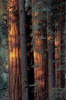 Soluciones antideslizantes para Redwood Cubiertas