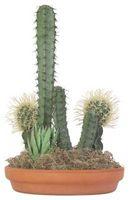 Cómo cuidar los jardines Plato de Cactus