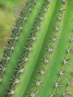 ¿Qué plantas tienen espinas?