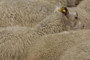 Cómo conseguir el olor de los zapatos con forro de piel de oveja