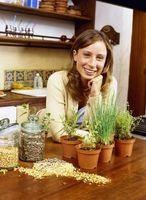 Cómo plantar las semillas en recipientes para flores de invierno