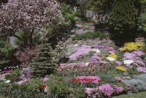 Consejos sobre un jardín de Imagen