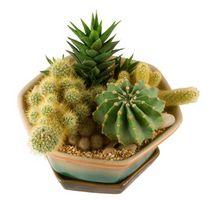 Variedades de cactus Plantas