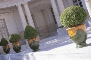 Las plantas resistentes para ollas para el aire libre