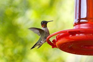 Problema con las hormigas en un alimentador de Hummingbird