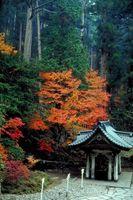 ¿Cómo hacer crecer un árbol de pagoda japonesa