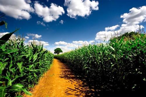 Cómo hacer un plan de rotación de cultivos