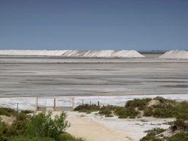 Tres plantas que viven en el pantano de sal