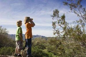 Cómo cuidar a un azul Palo Verde