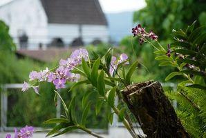 Simbiosis de la orquídea y del Árbol