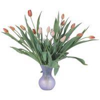 Cómo cuidar los Post-Floración de los tulipanes