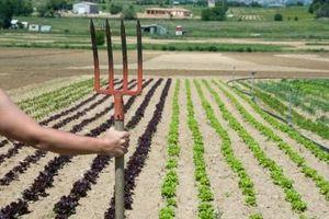 Los mejores Abonos para las hortalizas