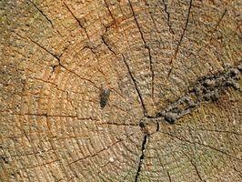 Cómo seleccionar un divisor de madera hidráulico