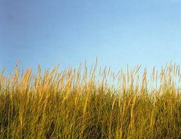 Cortadoras de hierba alta, malas hierbas y cepillo