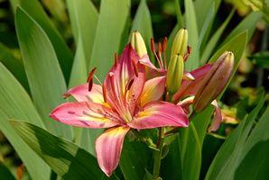 Zona 10 plantas florecientes