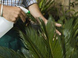 Crecimiento de las plantas y de la plata coloidal