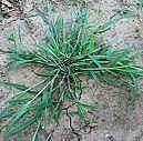 Cómo quitar las malas hierbas y la hierba en las grietas y hendiduras