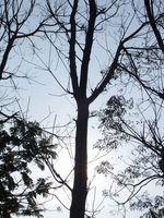 Cómo fijar el precio de una remoción de árboles