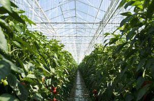 Cómo matar el hongo natural de las plantas