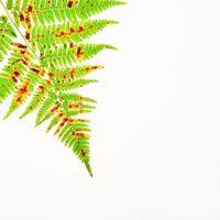 Maceta dentro de las plantas de una ventana del norte