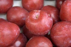 ¿En qué estación ¿El ciruelo japonés de árboles tienen fruto en ella?