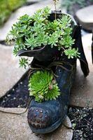 Ideas para la jardinería en macetas con plantas suculentas