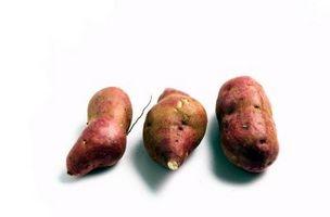 Los ciclos de crecimiento de la patata