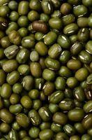 ¿Cuáles son las cosas dentro de la semilla como un Bean verde?