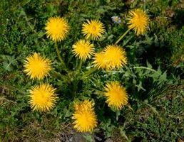 Fórmula casera para Herbicida