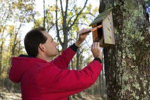 Cómo construir un estante de anidamiento para las Aves