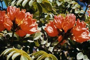 Crecimiento naranja en árboles o arbustos