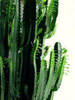 Cómo propagar las plantas nativas del desierto