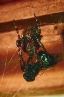 Las mejores maneras de deshacerse de las arañas en un gran edificio